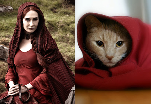 FOLLOW HICONSUMPTION       Advertise Here HICONSUMPTION DAILY EMAIL    GAME OF THRONES CHARACTERS AS CATS