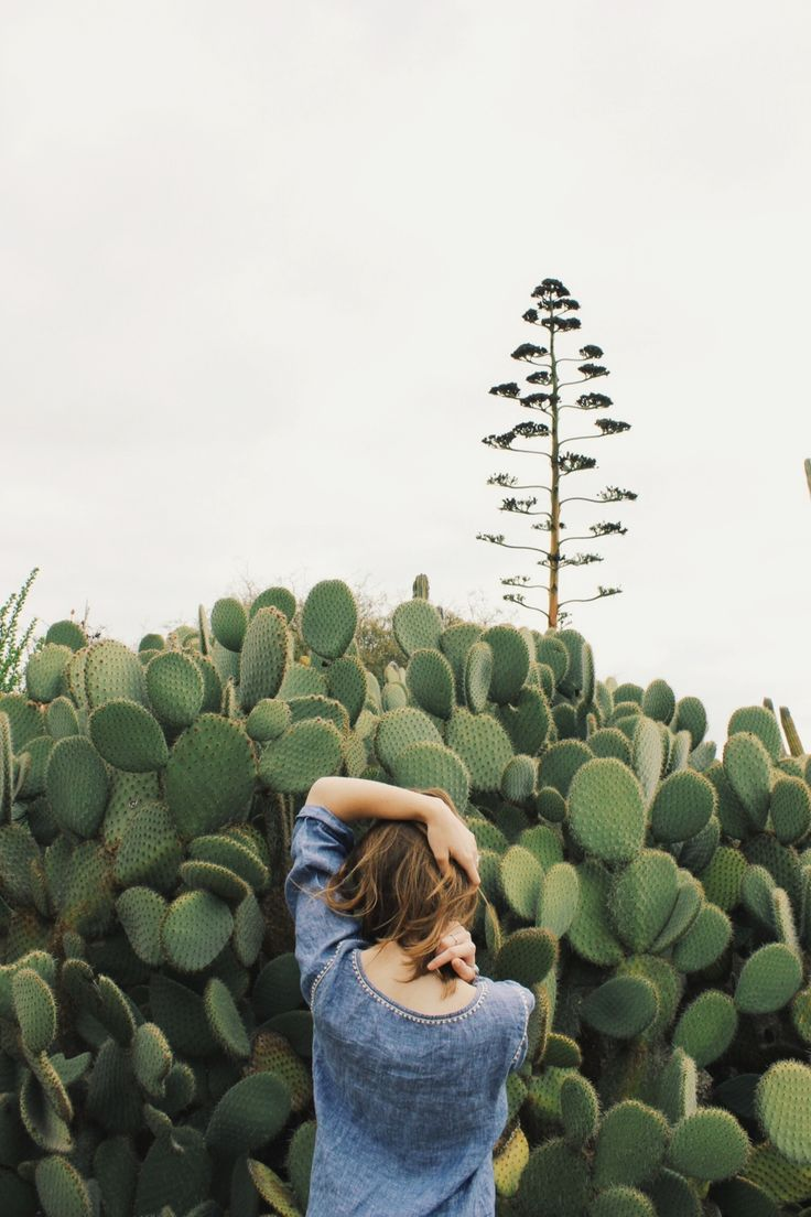 Pin Cactus Photography