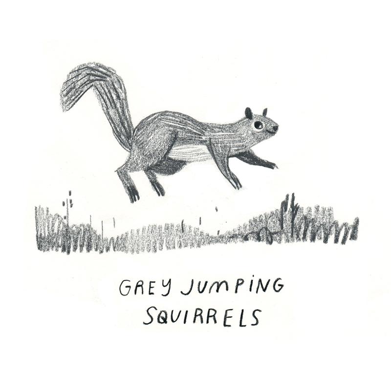 Rebecca Green - Squirrel