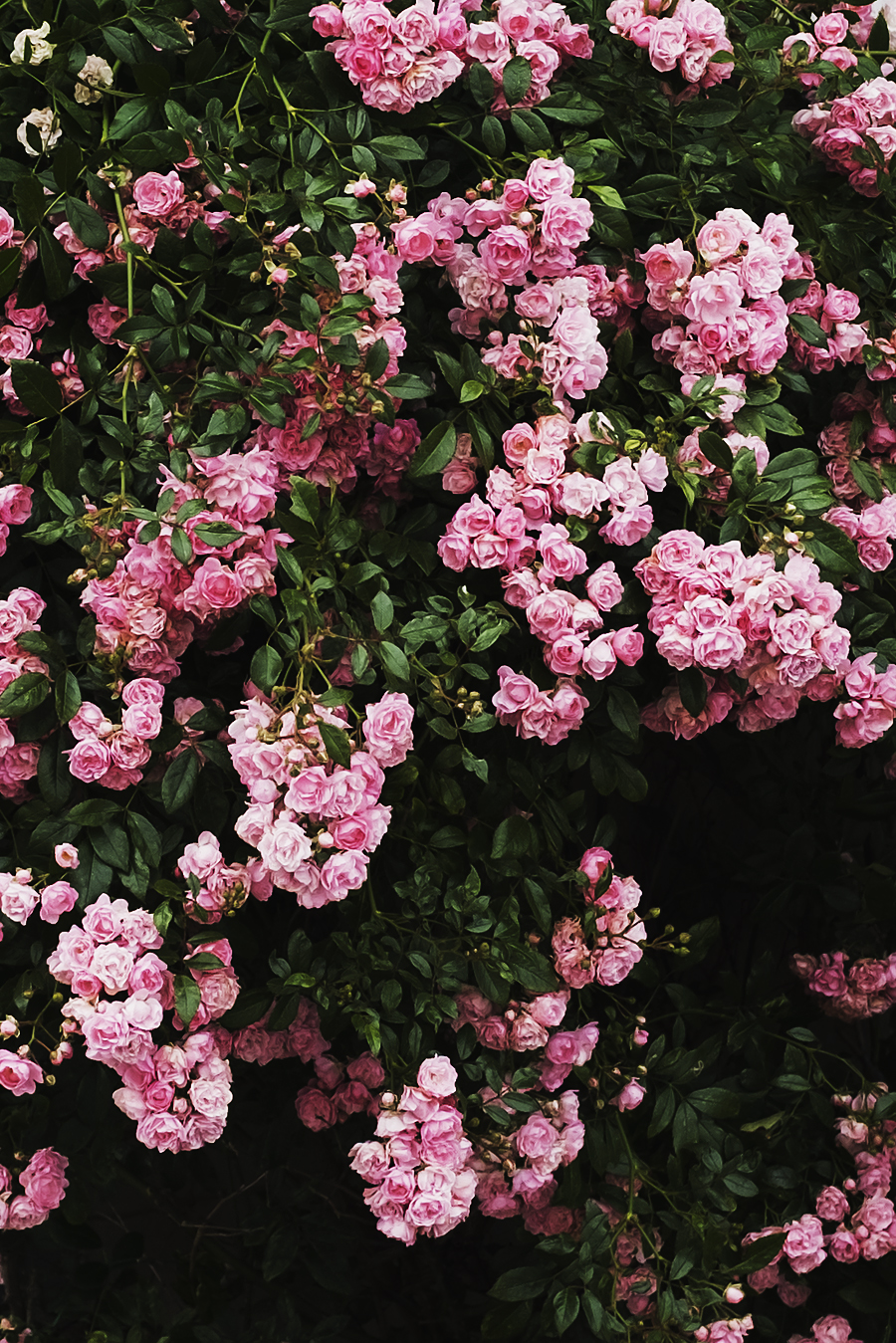 Annette Pehrsson Flowers