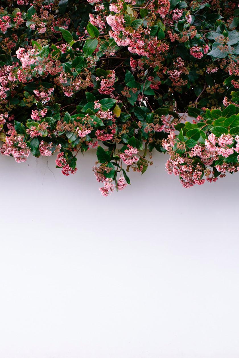 Luisa Brimble Flowers