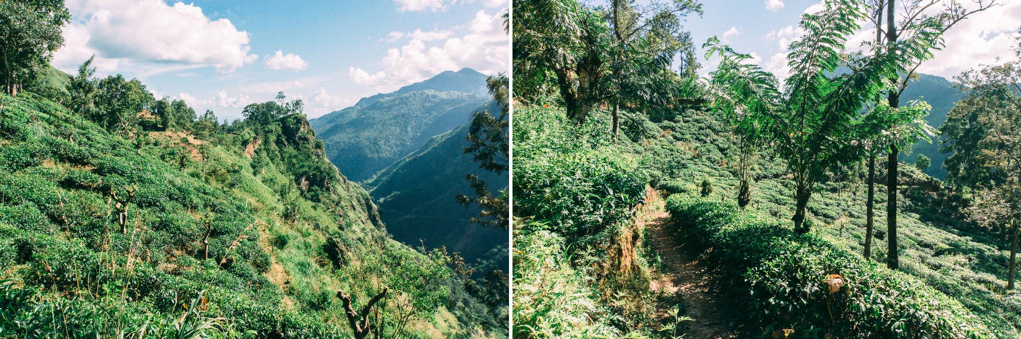 Sri-Lanka-Ella-Little-Adams-Peek-2.jpg