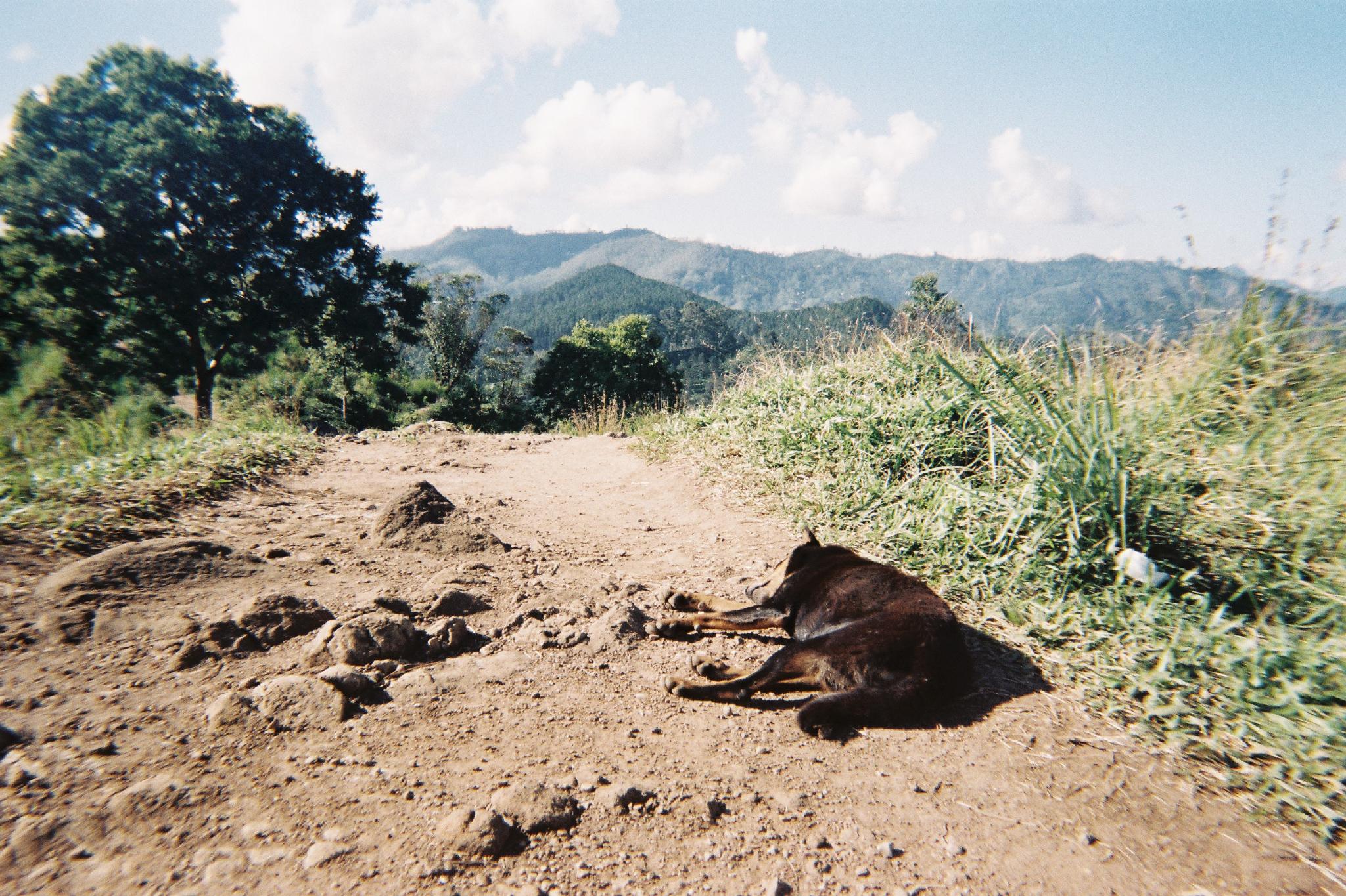 Sri-Lanka---Ella-Little-Adams-Peek.jpg