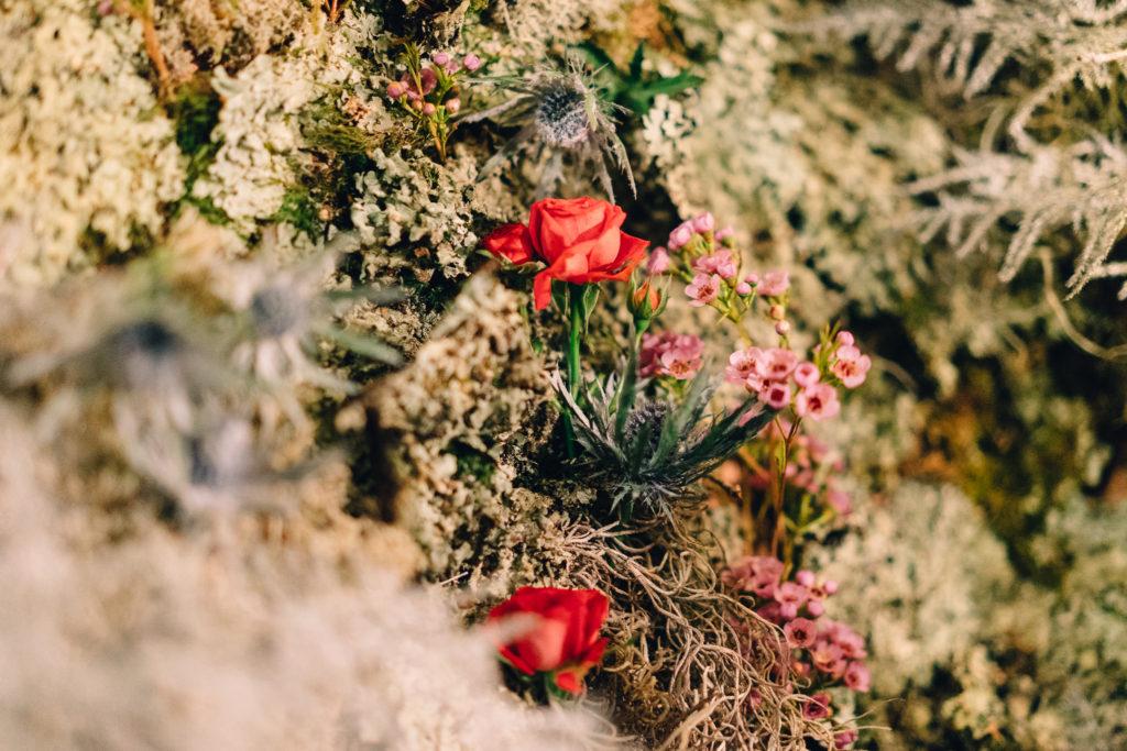 Mur végétal - Création Marianne Guedin pour Weleda