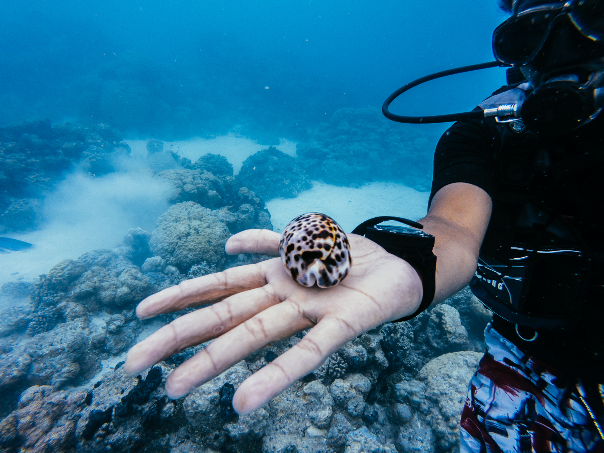 Tahiti Jours 4 Et 5 Plongée Et Ferme Perlière à Rangiroa