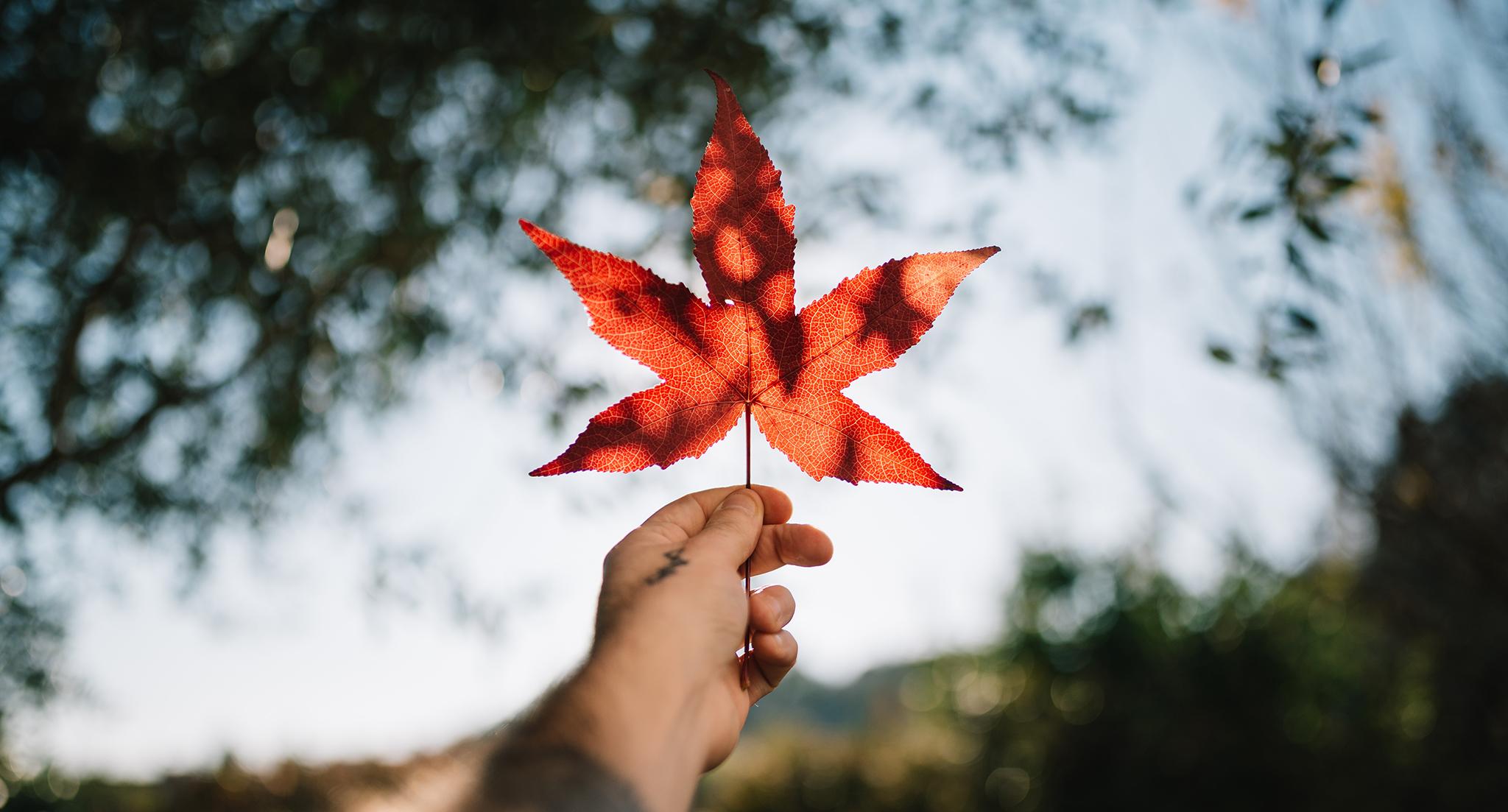Feuille d'érable - Canada