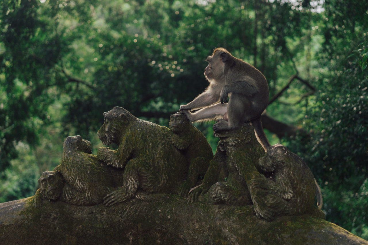 http://www.trendymood.com/wp-content/uploads/2018/05/Photo-retouchée-Forêt-des-singes-Bali-1280x853.jpg