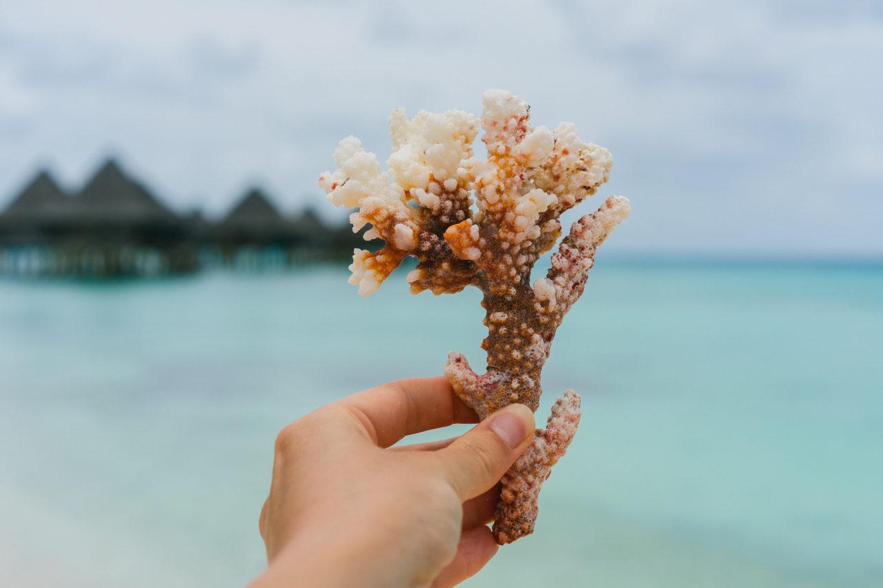http://www.trendymood.com/wp-content/uploads/2019/02/Corail-Tahiti-1280x853.jpg